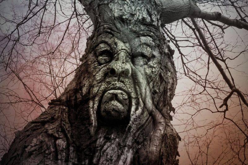 n vieil arbre lonley a un visage en colère dans l'écorce avec beaucoup de branches d'arbres sur le dessus