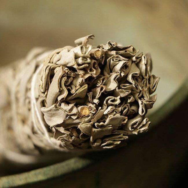 Sauge blanche à brûler – Bâton de fumigation