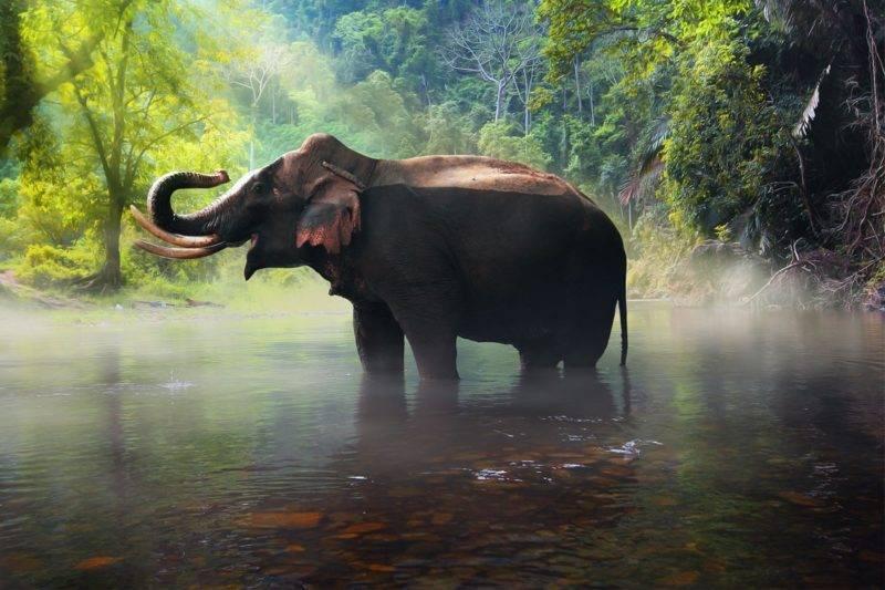 Un éléphant dans la jungle les pieds dans l'eau