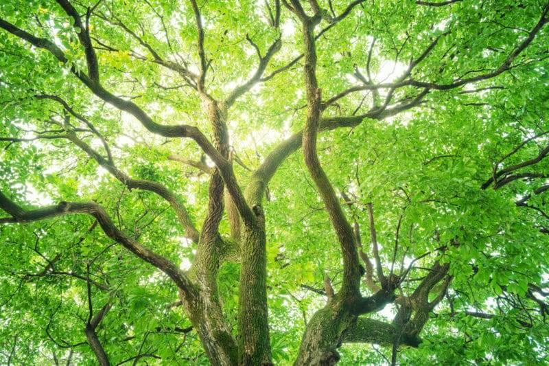 Grand arbre dans une forêt