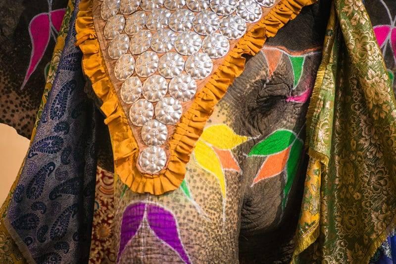 Eléphant avec des vêtements traditionnels à Jaipur en Inde.