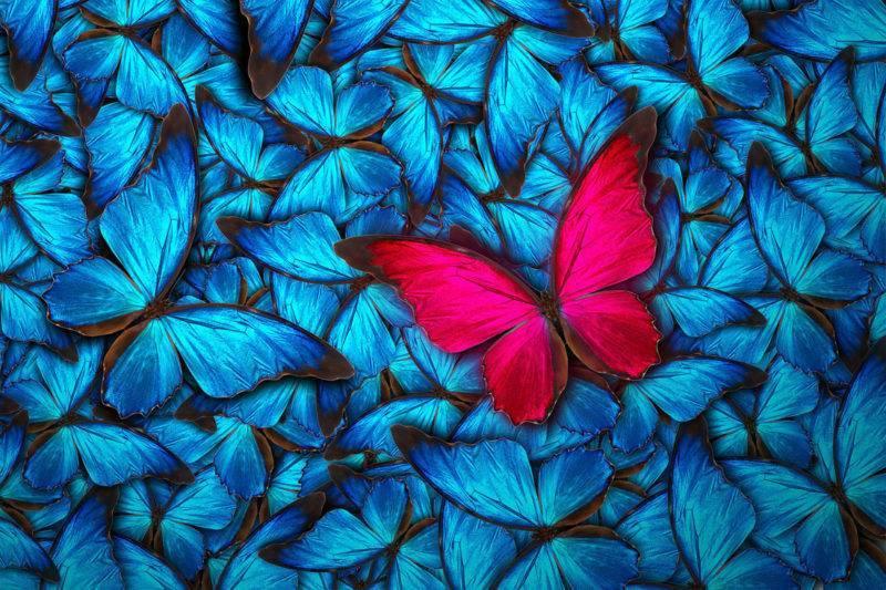 Fond pleins de papillons