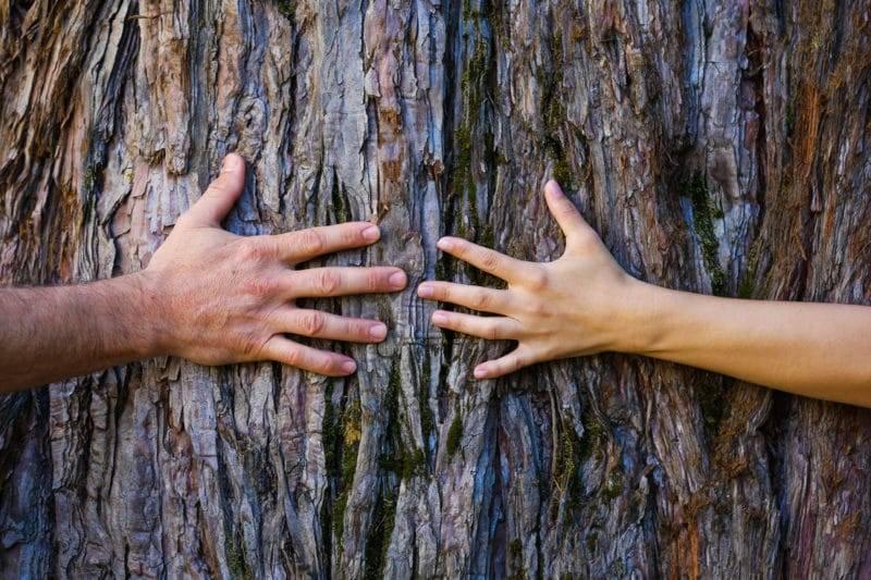 Mains qui touchent un arbre