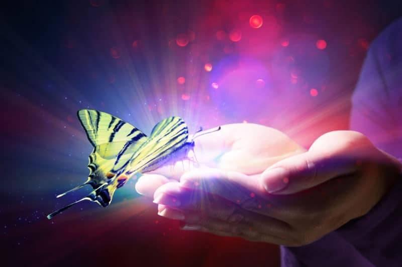 Papillon dans une main