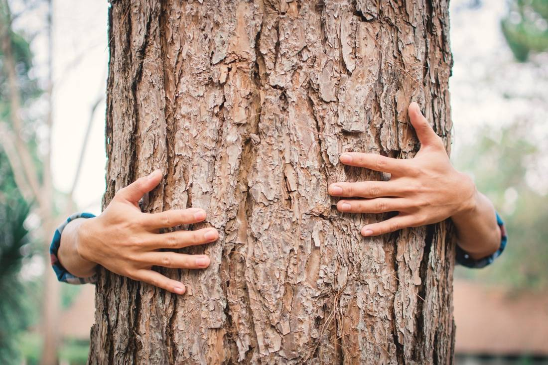 Mains qui enlacent un arbre